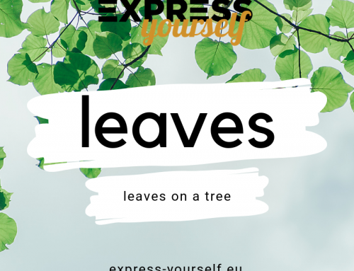 Words with multiple meanings – leaves
